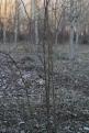 Arbusto de Rosal Silvestre hibernando