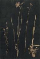 Paul Klee-579446