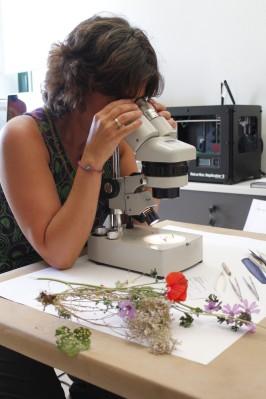 Observación de flores y otros órganos con lupa estereoscópica (cortesía de la Universidad de León)