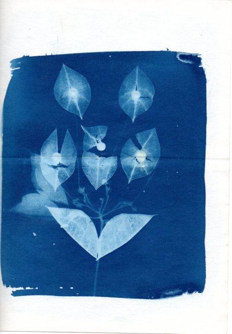 Cianotipos de Cristina Celich