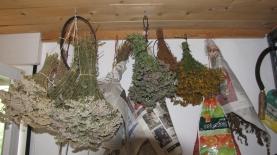 LorenaLozano_Herbarium_JardindeElo6