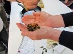 Herbarium_cremadecalenduladeElo15