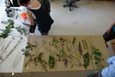 Herbarium_LorenaLozano8