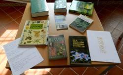 LorenaLozano_Herbarium_Veranes13