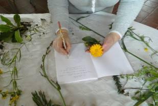 LorenaLozano_Herbarium_Veranes14