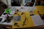 Herbarium_LorenaLozano_10