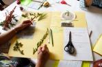 Herbarium_LorenaLozano_16