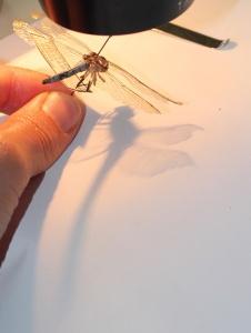 Herbarium-LorenaLozano14