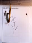 Herbarium-LorenaLozano9