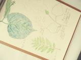 LorenaLozano-Herbarium-10