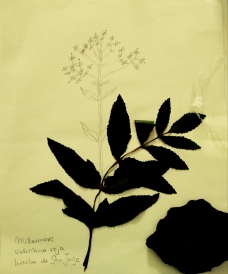 LorenaLozano-Herbarium-2