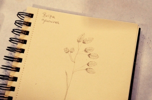 LorenaLozano-Herbarium-4