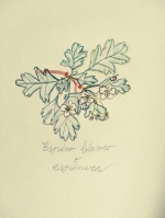 LorenaLozano-Herbarium-6