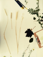 Herbarium-LorenaLozano10