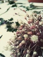 Herbarium-LorenaLozano13