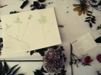 Herbarium-LorenaLozano7