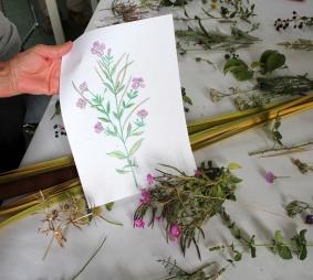 lorenalozano-herbarium_econodos7