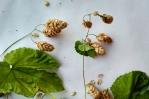 Herbarium2017econodos1