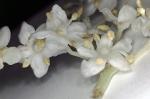 Herbarium2017econodos7